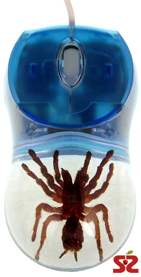 Мышь с тарантулом внутри