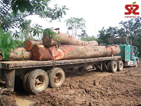 Все деревья тропических лесов оснастят чипами