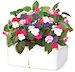 Горшок для цветов Click and Grow