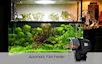 Кормушка для рыбок — Automatic Fish Feeder