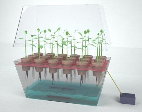 Клонирование спасет редкие лекарственные растения