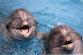 Общение с дельфинами скоро станет возможным