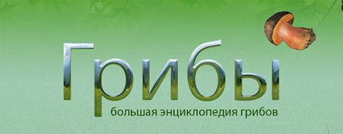 Большая энциклопедия грибов