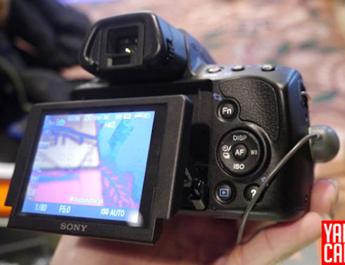 Первые снимки Sony a37
