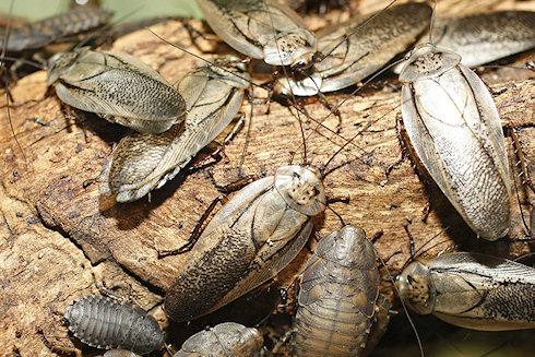 Берегите тараканов