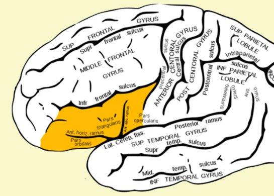 Ученые сделали новое открытие про мозг человека
