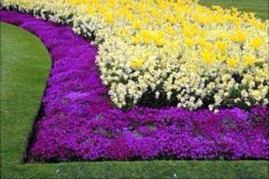 Как посадить цветы красиво