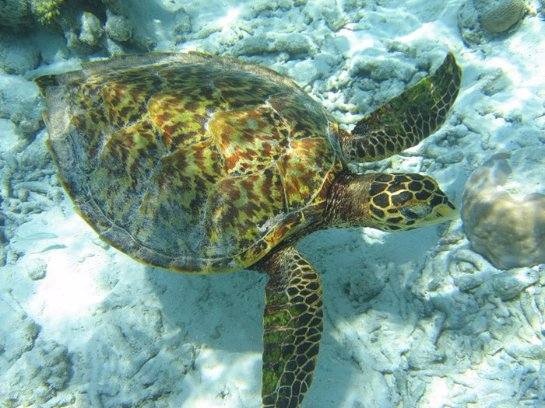 Дайвинг в тайных атоллах Мальдивских островов