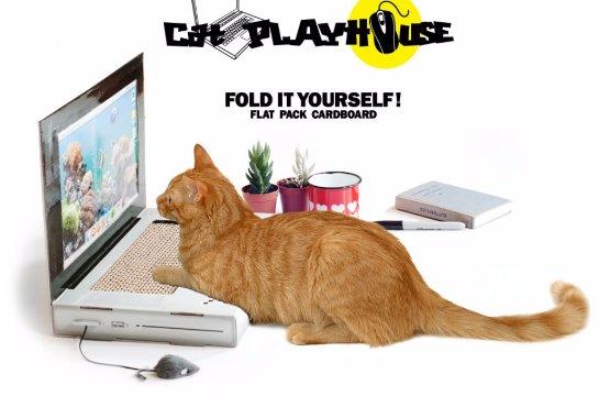 Разработан ноутбук для котов