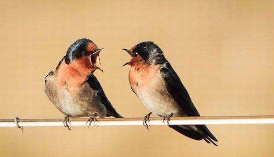 Специалисты выяснили, как птицы выбирают место для отдыха во время миграции