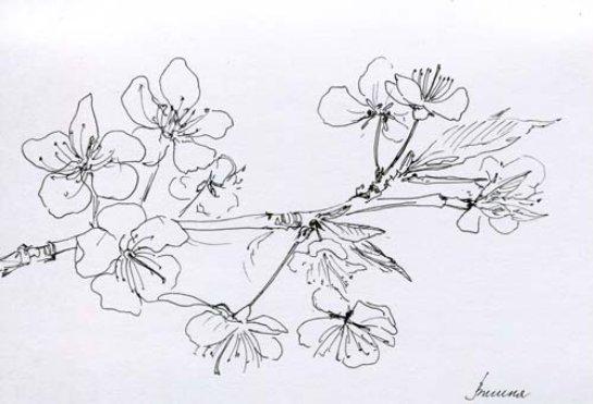 Значение татуировки цветущая вишня