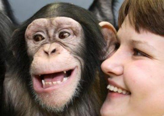 Исследователи: шимпанзе и люди одинаково доверяют своим близким
