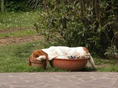 Очаровательные животные, уснувшие в самых неожиданных местах. Фото