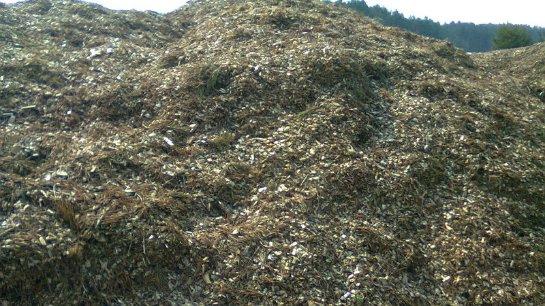 Ученые хотят добывать топливо из биомассы