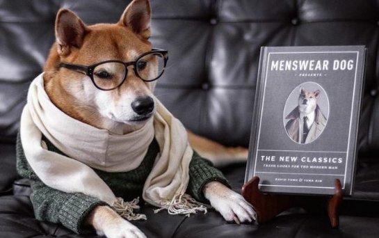 Знаменитый пес-блогер может стать собакой года. Фото