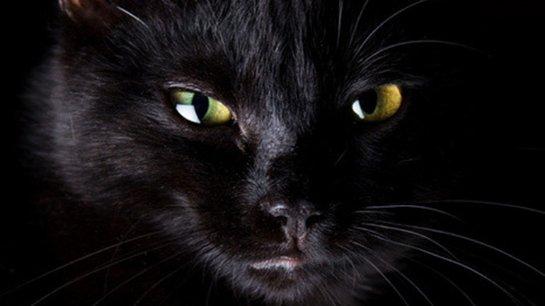ВИДЕОХИТ: чёрный кот защищает ребёнка