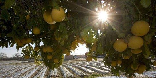 Грейпфрут помогает бороться с раком