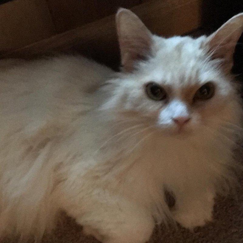 Бойтесь, люди: кот со злобной мордой стал хитом интернета