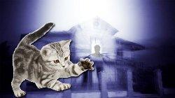Полтергейст не хочет уживаться с котенком