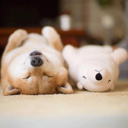 «Как плюшевый мишка»: милый пес покорил Интернет