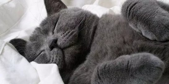 Техника быстрого сна предлагает высыпаться за 2 часа в сутки