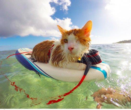 Одноглазый кот который любит плавать покорил интернет