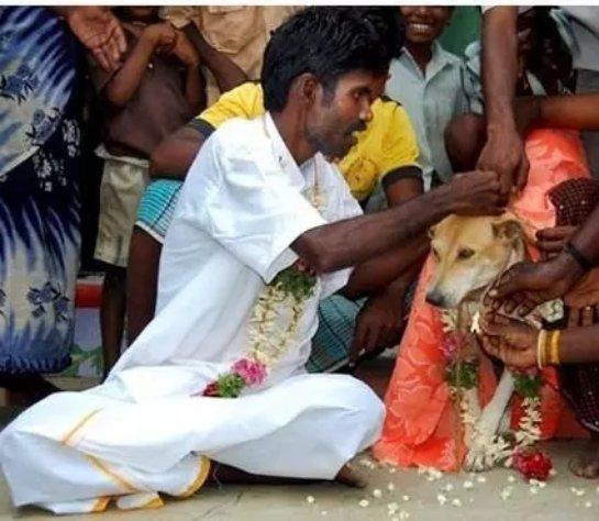 Женили на бродячей собаке