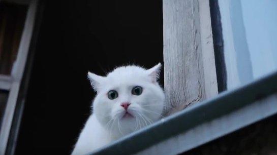 ВИДЕОХИТ: кот защищает квартиру лучше собаки
