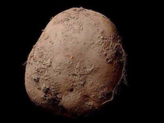 Фото картофеля на черном фоне оценили в 1 миллион долларов