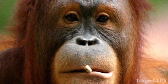 Курение – признак низкого интеллекта