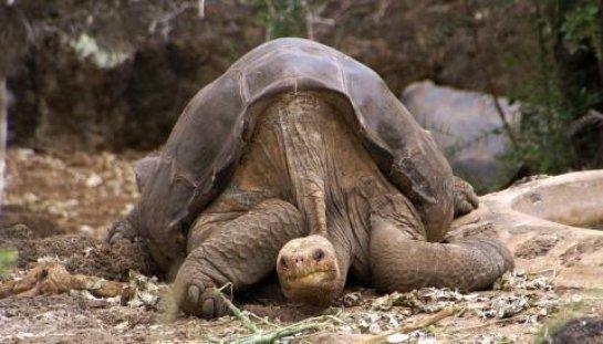 Вымершие черепахи вернутся к жизни (ВИДЕО)