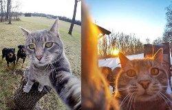 Кот, который делает идеальные селфи