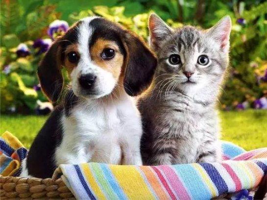 Привычи животных, которые ставят нас в тупик
