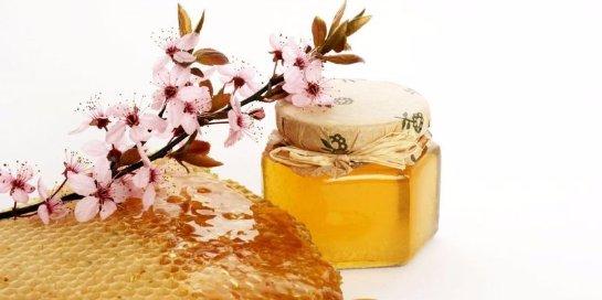 Лечение медом: новые свойства известного продукта