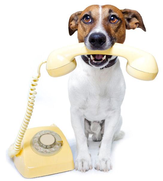 Качественный сервис массового дозвона клиентам