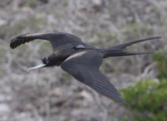 Во время длительных перелетов птицы спят прямо в воздухе
