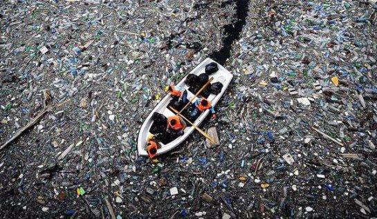 В Мировом океане становится мало места для рыбы