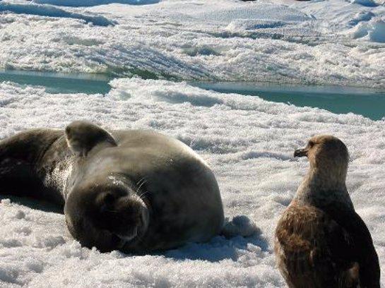 Животные умирают из-за изменения климатических условий на Земле