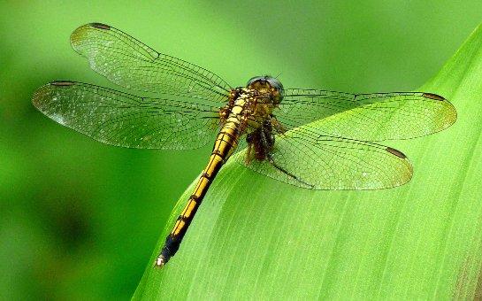 Ученые рассказали о жизнедеятельности стрекозы