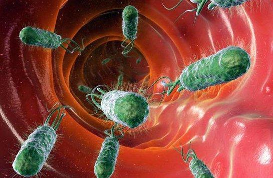 » Спящие» бактерии-убийцы провоцируют смерти людей
