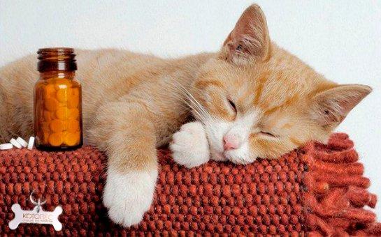 Стало известно, что лучше всего помогает уснуть