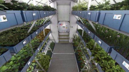 В космосе впервые был выращен салат