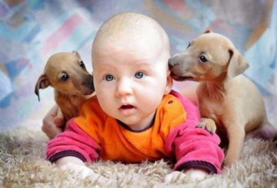 Домашние животные улучшают иммунитет человека