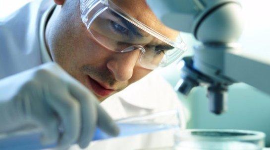 Ученым удалось вырастить мозг изкожи человека