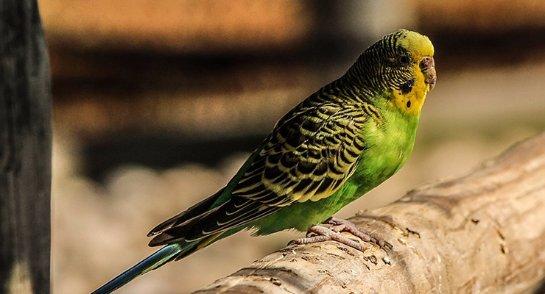 Возле Байкала нашли останки древнего попугая