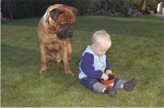 Ученые выяснили, что дети могут страдать от собачьего корма