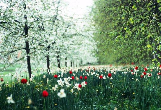 Ученые рассказали, каким образом растения чувствуют весну