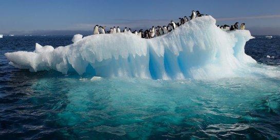 В Антарктиде найден новый вид бактерий