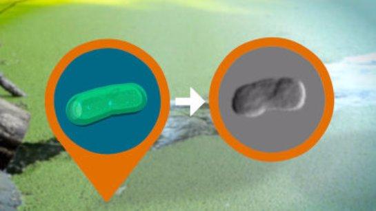 В России создали серебряный сенсор для диагностики инфекций