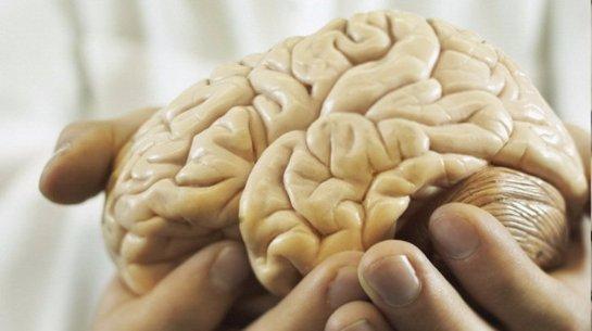 В России умеют выращивать искусственный мозг